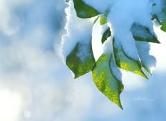 Fonds d'écran Nature Vert Et Blanc.