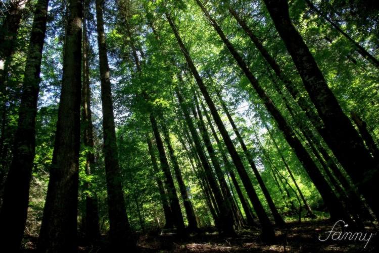 Fonds d'écran Nature Arbres - Forêts Le temps d'une promenade