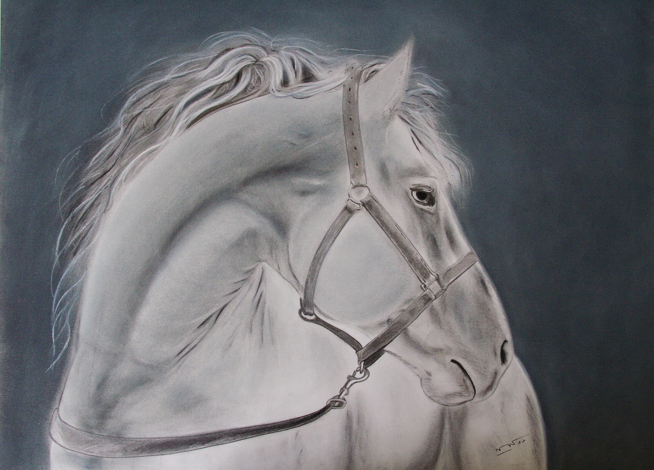 Wallpapers Art - Pencil Animals - Horses Cheval