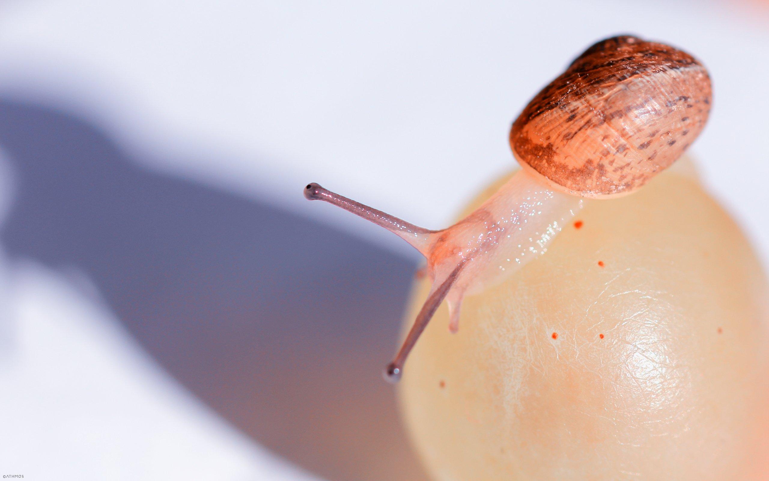 Fonds d'écran Animaux Escargots - Limaces A la découverte du monde !