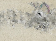 Wallpapers Digital Art Ghostly Owl