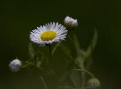 Fonds d'écran Nature Blume