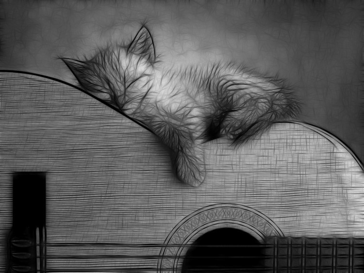 Wallpapers Animals Cats - Kittens Chaton Guitariste