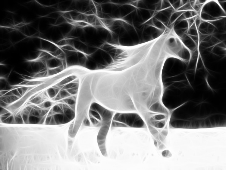 Wallpapers Animals Horses Cheval blanc