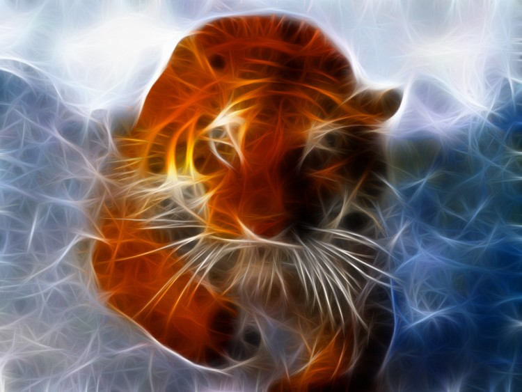 Wallpapers Animals Wallpapers Felines Tigers Tigre Qui