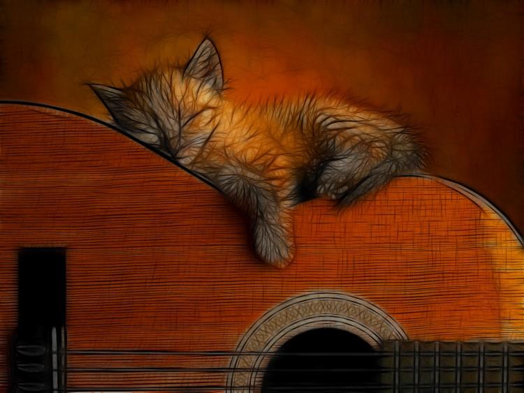 Fonds d'écran Animaux Chats - Chatons Chaton et sa guitare