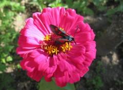 Wallpapers Animals Papillon fleuri