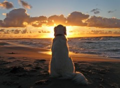 Wallpapers Animals Le coucher de soleil