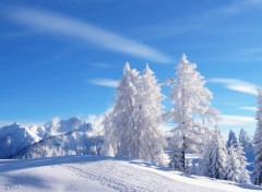 Wallpapers Nature Hiver