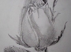 Fonds d'écran Art - Crayon Rose