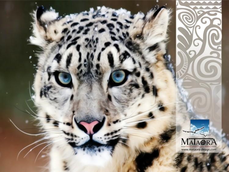Fonds d'écran Grandes marques et publicité Mataora Wallpaper N°274443