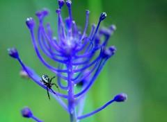 Fonds d'écran Animaux Un joli bijou d'araignée