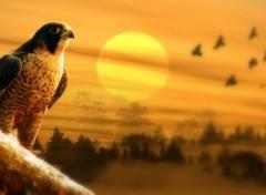Fonds d'écran Art - Numérique faucon pelerin