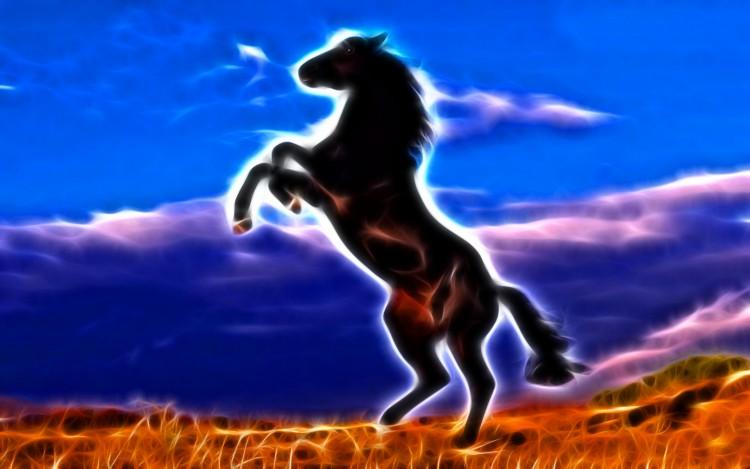 Wallpapers Animals Horses Cheval noir cabré
