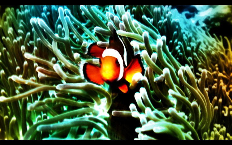 Wallpapers Animals Sealife - Fishes Lost Fish