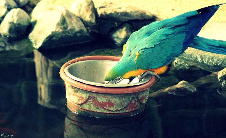 Fonds d'écran Animaux Oiseaux - Perroquets Wallpaper N°275660