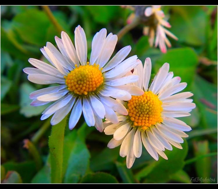 Fonds d'écran Nature Fleurs Wallpaper N°276780