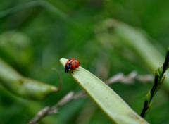 Wallpapers Animals PETIT insecte ORANGE ROUGE...