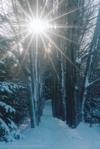 Fonds d'écran Nature Arbres - Forêts Sentier lumineux