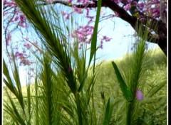 Fonds d'écran Nature Ah! le printemps