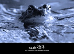 Wallpapers Animals grenouille