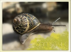 Wallpapers Animals snailstyle