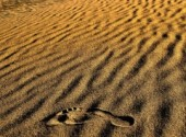 Fonds d'écran Nature La trace...