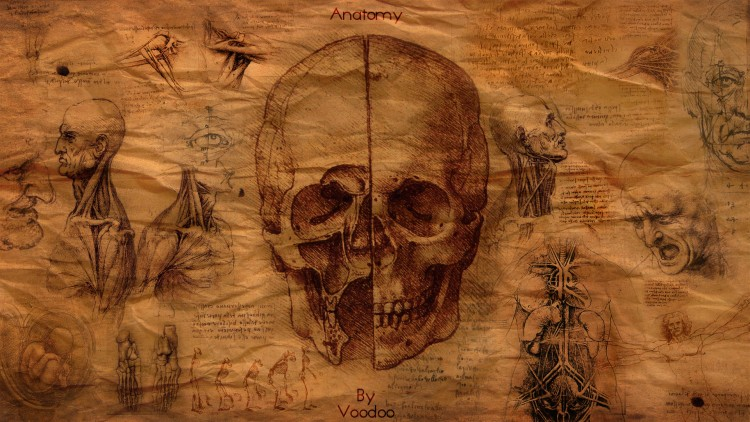 Wallpapers Digital Art Compositions 2D Anatomy