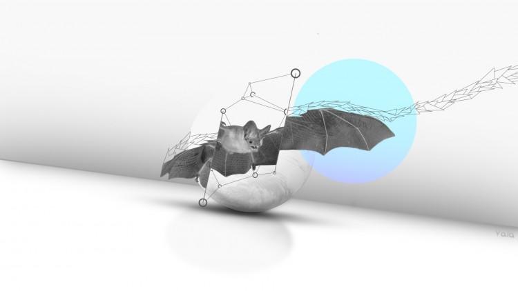 Fonds d'écran Art - Numérique Animaux Bat Bat Bat !!