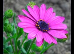 Fonds d'écran Nature jolie fleur..