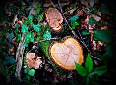 Fonds d'écran Nature L'age des arbres