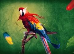 Wallpapers Digital Art Ara Macao's Colors Emotion