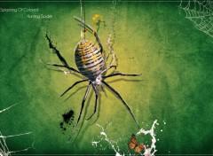 Wallpapers Digital Art Hunting Spider