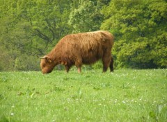 Wallpapers Animals Dunnon, Scotland