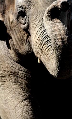 Wallpapers Animals Elephants Wallpaper N°279630