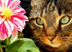 Wallpapers Animals flower and cat