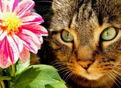 Fonds d'écran Animaux flower and cat