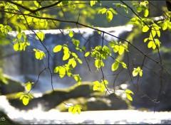 Fonds d'écran Nature Arbre de printemps