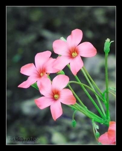 Fonds d'écran Nature Fleurs Wallpaper N°280610