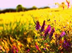 Fonds d'écran Nature Fleurs Sauvage