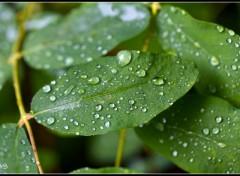 Fonds d'écran Nature Après la pluie...