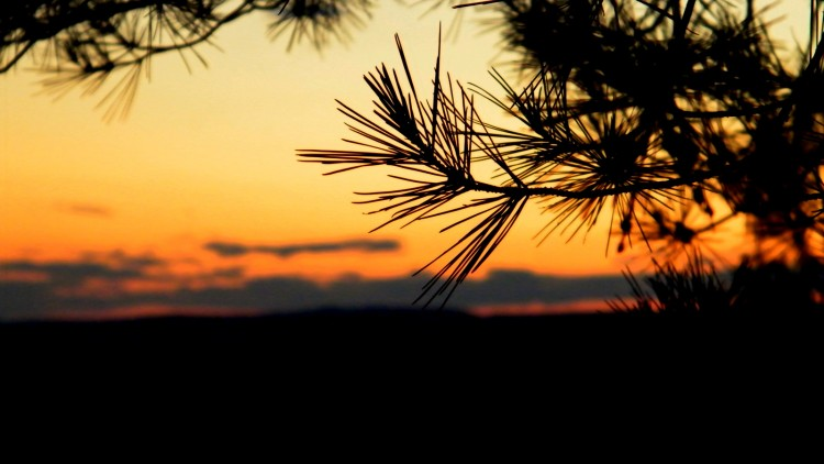 Wallpapers Nature Sunsets and sunrises brindille de pin
