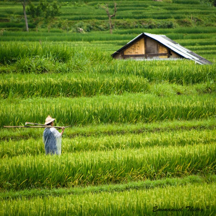 Wallpapers Trips : Asia Vietnam Farmer