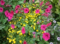 Fonds d'écran Nature Jardin de Fleures
