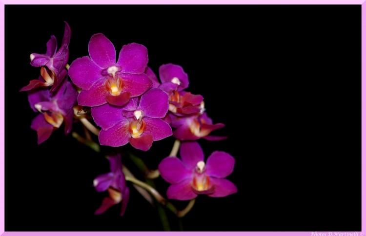 Fonds D Ecran Nature Fonds D Ecran Fleurs Orchidee Par