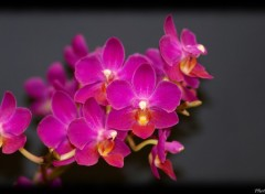 Wallpapers Nature Orchidee bis