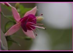 Fonds d'écran Nature fleurs