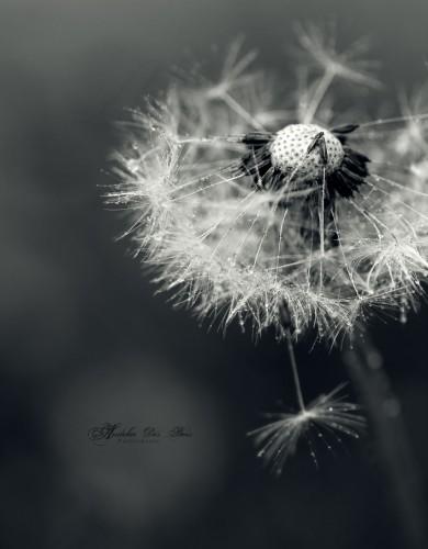 Fonds d'écran Nature Fleurs Calme.