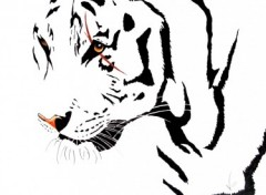 Fonds d'écran Art - Crayon white tiger