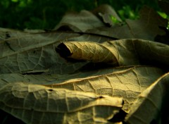 Wallpapers Nature feuille morte...